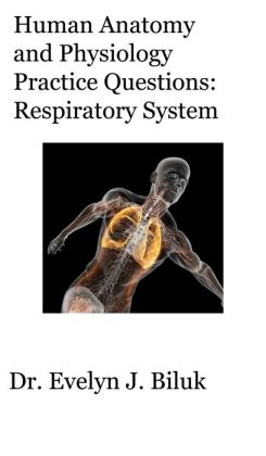 Human Anatomy and Physiology Practice Questions: Respiratory System
