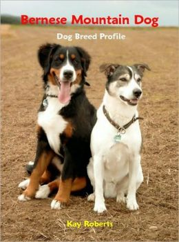 Bernese Mountain Dog Dog Breed Profile