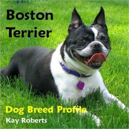 Boston Terrier Dog Breed Profile