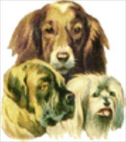 Dog Bone Recipes
