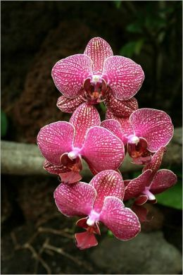 Orchids: The Queen of Fragrant Plants