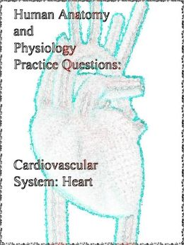 Human Anatomy and Physiology Practice Questions: Cardiovascular System: Heart