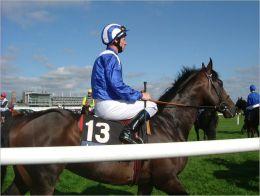 Horse Racing: You Bet!!
