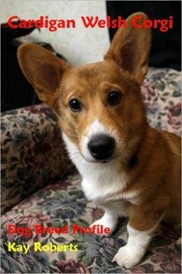 Cardigan Welsh Corgi Dog Breed Profile