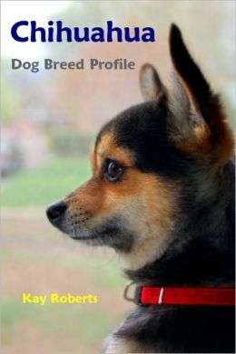 Chihuahua Dog Breed Profile