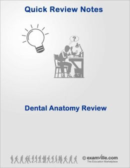 Dental Anatomy Quick Review