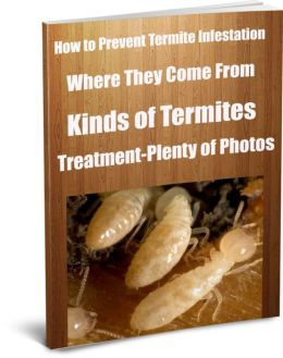 How to Prevent Termite Infestation Where They Come From-Kinds of Termites-Treatment-Plenty of Photos