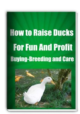 How to Raise Ducks for Fun And Profit Buying-Breeding and Care