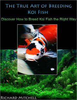 The true art of breeding koi fish discover how to breed for Raising koi fish