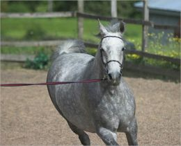 Horse Training: An Essential Guide For Beginners