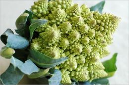 Cabbages and Cauliflowers How to Grow Them (Illustrated)