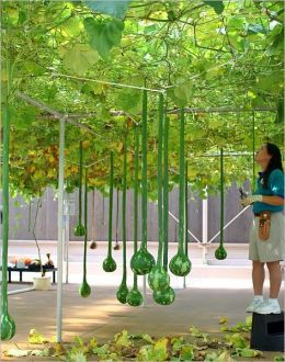 HYDROPONICS : Learn the FUTURE of Gardening!