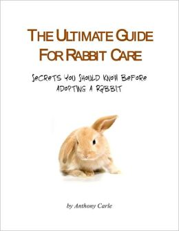 The Ultimate Guide for Rabbit Care