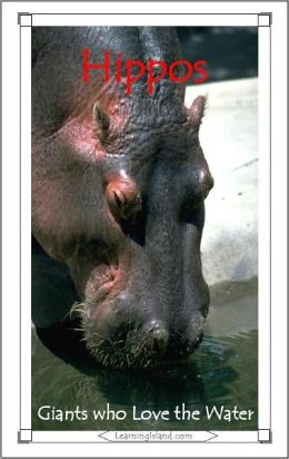 Hippos: Giants Who Love the Water