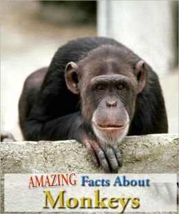 Amazing Facts About Monkeys!
