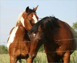Homemade Horse Treats Recipes Your Horses Will Like