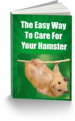 The Easy Way To Care For Your Hamster They may be small, but these little guys are BIG on personality. Do you have what it takes to be a hamster pet parent?