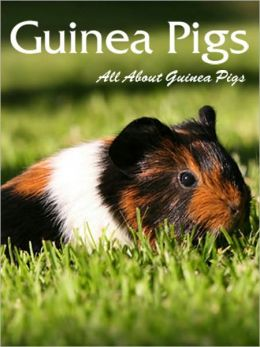 Guinea Pigs: All About Guinea Pigs