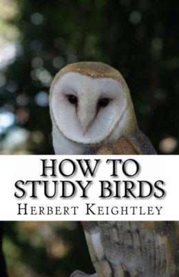 nature: How to Study Birds ( nature Children, amazing animals, cutest animals, baby animals, wild, forest, beast, animals )