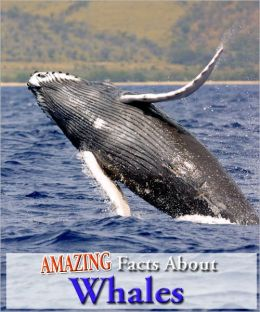 Amazing Facts About Whales!