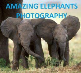 AMAZING ELEPHANTS PHOTOGRAPHY