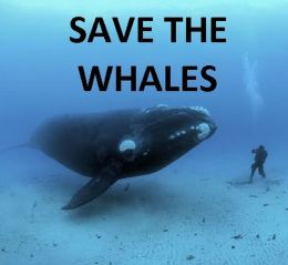 SAVE THE WHALES PHOTOGRAPHY ( whale, bull whale, cow whale, photography, fantastic, fanciful, fantastical, visional )