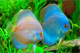 Tropical Freshwater Fish for Beginners