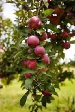 How to Grow Healthy Fruit Trees