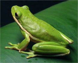 Tree Frog Care for Beginners