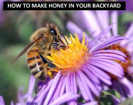 How to Make Honey in Your Backyard!