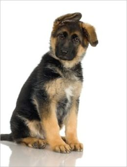 German Shepherd Training For Beginners