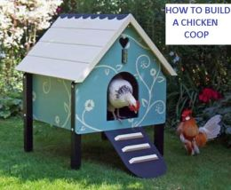 International Cooking: HOW TO BUILD A SIMPLE CHICKEN COOP ( chicken, chick, poult, cock, coop, impound, trammel, agriculture, farming, cultivation, husbandry)