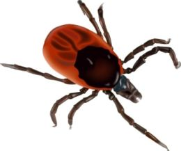 Chagas Disease: Causes, Symptoms and Treatments
