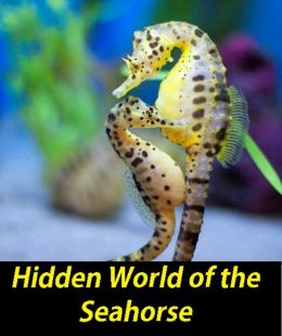 Hidden World of the Seahorse