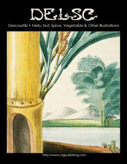 Descourtilz - Herb, Nut, Spice, Vegetable & Other Illustrations