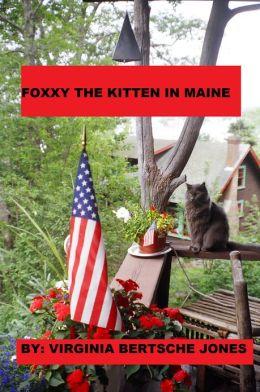 Foxxy the Kitten in Maine