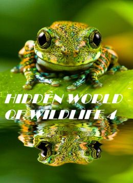 Hidden World of Wildlife 4