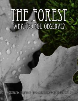The Forest - What Do You Observe