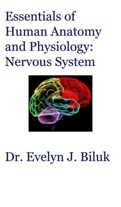 Essentials of Human Anatomy and Physiology: Nervous System