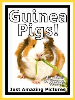 Just Guinea Pig Photos! Big Book of Photographs & Pictures of Guinea Pigs, Vol. 1
