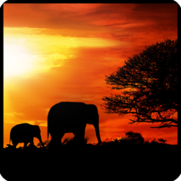 African Sunset Live Wallpaper!