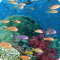 Under Sea Adventures Live Wallpaper