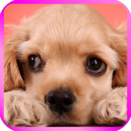 Puppies and Kittens Wallpaper