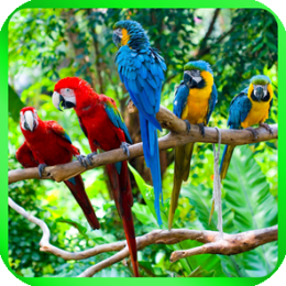 Rain Forest Wallpapers