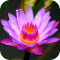 Flower Power Live Wallpaper