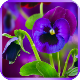 Gorgeous Flowers Wallpapers