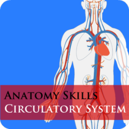 Anatomy Skills - Circulatory System