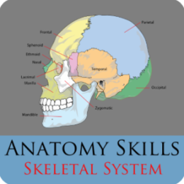 Anatomy Skills - Bones of the Body