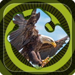 Magic Puzzles: American Eagle
