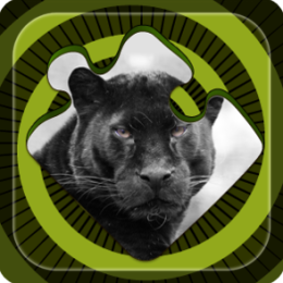 Magic Puzzles: Black Panther of the Jungle
